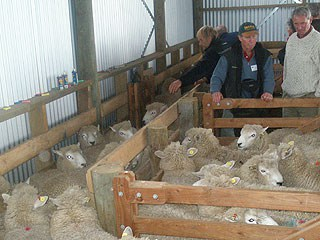 Grading Perendales at Newhaven
