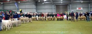 Judging of the Inter-Breed Class