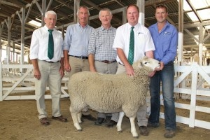 NE 1004/14 bred by David Ruddenklau, centre, and Blair Smith, far right, made $13,500 when it was sold to Blair Gallager, second left. Also pictured are PGG Wrightson stud stock agents Callum Dunnett and Roger Keach. PHOTO : Diane Bishop